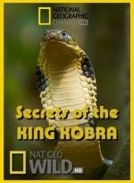 Xem Phim National Geographic Secrets Of The King Cobra-Bí Mật Rắn Hổ Mang Chúa