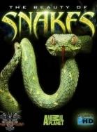 Xem Phim The Beauty Of Snakes-Vẻ Đẹp Của Loài Rắn