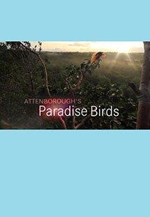 Xem Phim Attenborough's Paradise Birds-Loài Chim Thiên Đường