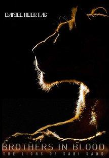 Xem Phim Brothers in Blood: The Lions of Sabi Sand-Đàn Sư Tử Khét Tiếng Nhất Châu Phi